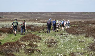 Crossing Bingley Moor through heather and cottongrass - 19May2018