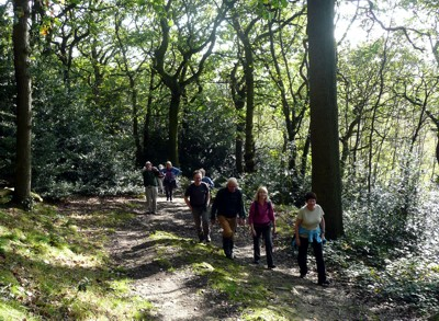 Friends of A Dales High Way and members of the Dales Way Association climbing through Trench Woods