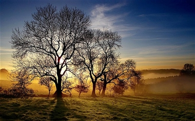 Ash trees; from The Telegraph. Photo: ALAMY
